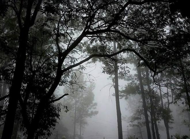 light and dark trees
